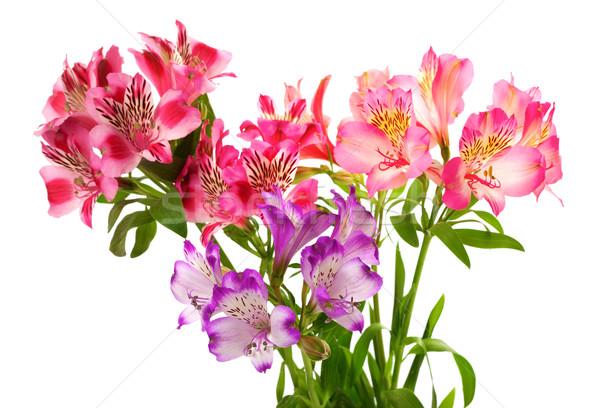 花束 ユリ 孤立した 白 葉 緑 ストックフォト © BSANI