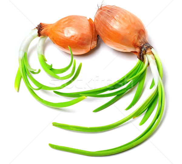Stock photo: Sprouting onions