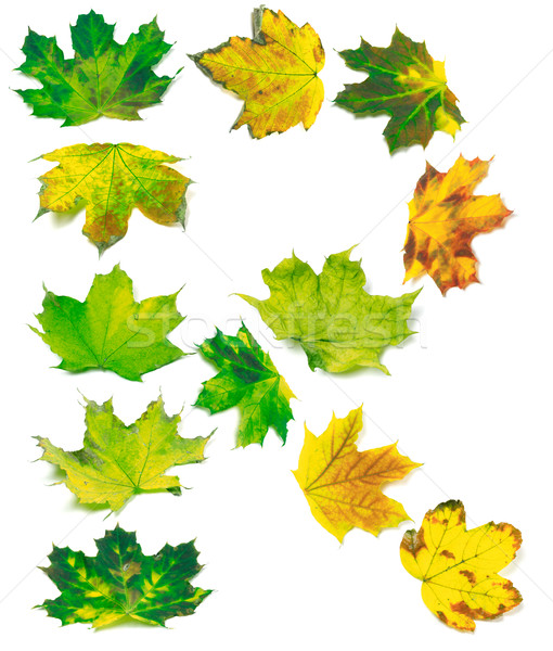 Letter R composed of multicolor maple leafs Stock photo © BSANI
