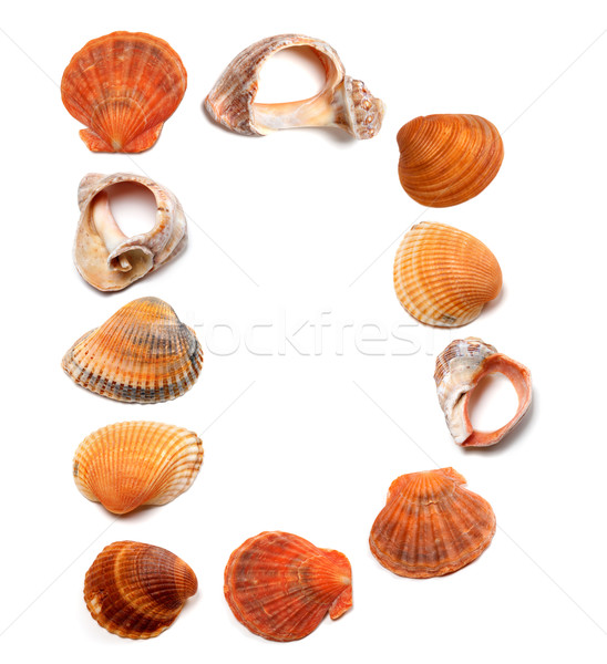 Letter D composed of seashells Stock photo © BSANI