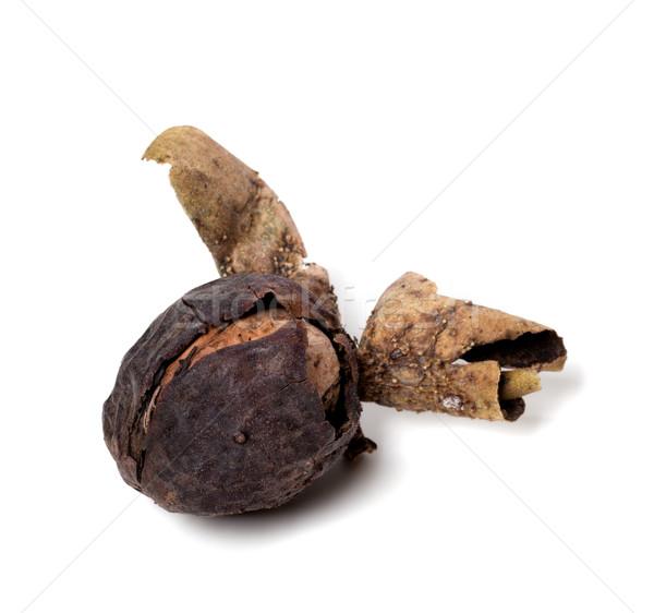 Raw walnut just a tree Stock photo © BSANI