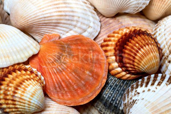 Obus plage alimentaire beauté été Photo stock © BSANI
