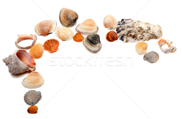 Collection of seashells with copy space Stock photo © BSANI