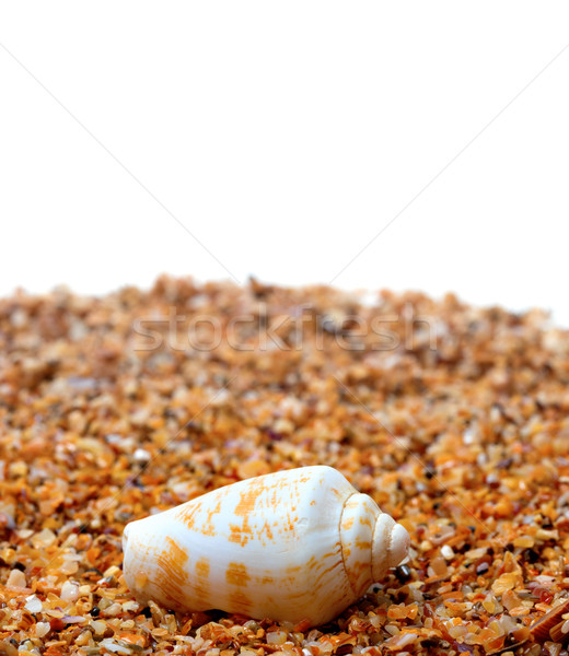 Shell of cone snail on sand Stock photo © BSANI