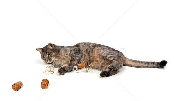 Gray cat lying on its side with champagne wine corks and muselet Stock photo © BSANI