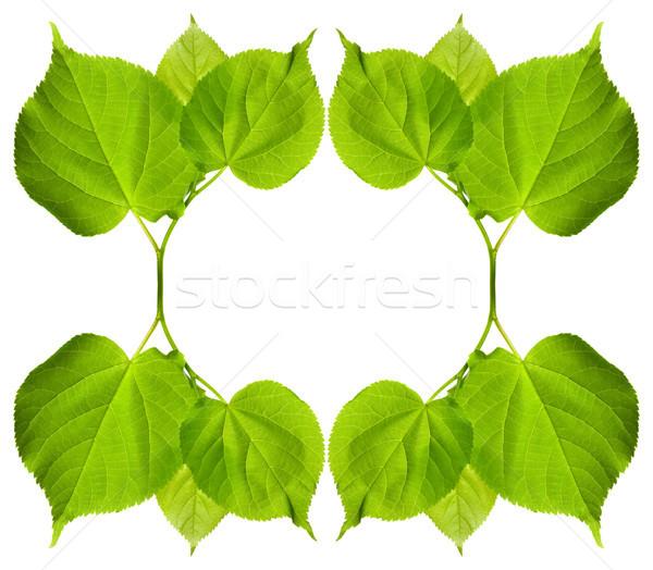 Quadro verde folhas isolado branco cópia espaço Foto stock © BSANI