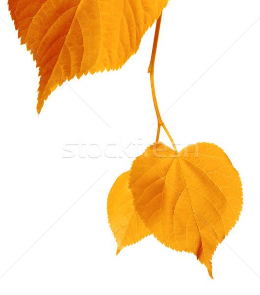 Yellowed autumnal leaves  Stock photo © BSANI