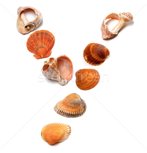 Letter Y composed of seashells Stock photo © BSANI
