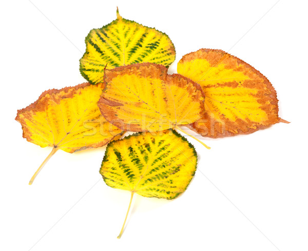 Autumn multicolored leafs Stock photo © BSANI