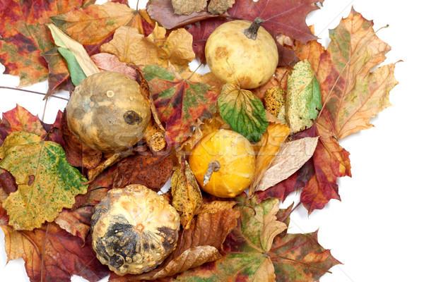 четыре небольшой декоративный осень Сток-фото © BSANI