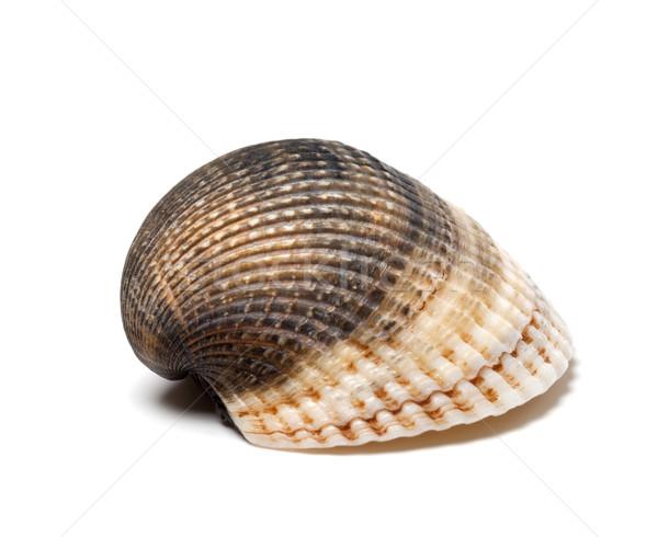 Seashell on white background Stock photo © BSANI