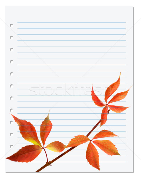 Exercise book with autumnal virginia creeper leaf  Stock photo © BSANI