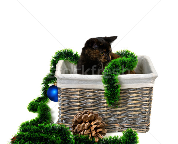 Brown kitten sitting in wicker basket with Christmas tinsel, Chr Stock photo © BSANI