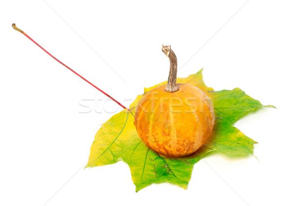 Small orange decorative pumpkin on yellowed maple leaf Stock photo © BSANI