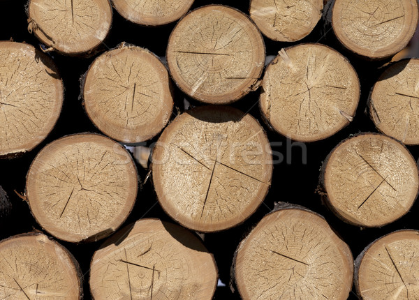 スタック 薪 クローズアップ 表示 火災 森林 ストックフォト © BSANI