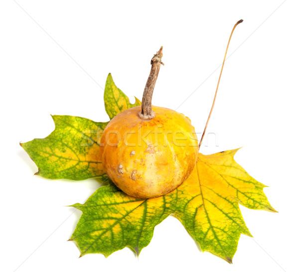 Small decorative pumpkin on autumn yellowed maple-leaf Stock photo © BSANI