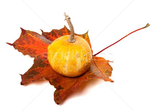 Decorative pumpkin on red autumn maple-leaf Stock photo © BSANI