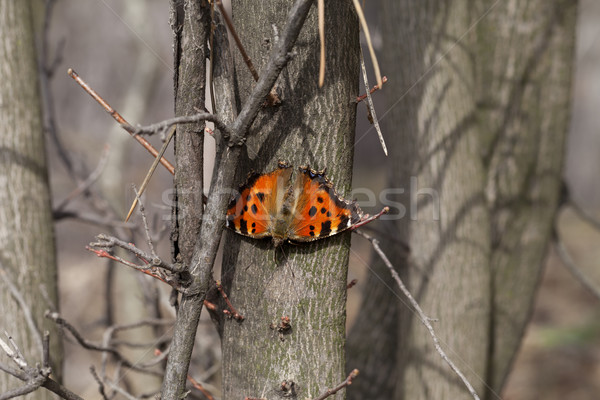 Butterfly on tree trunk in forest Stock photo © BSANI