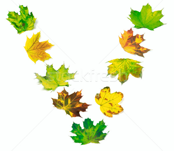 Letter V composed of multicolor maple leafs Stock photo © BSANI