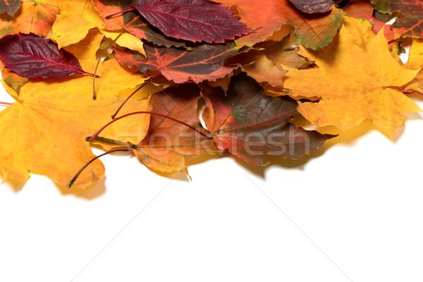 Outono isolado branco cópia espaço floresta natureza Foto stock © BSANI