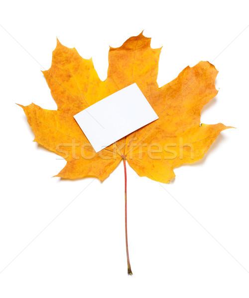 ősz citromsárga fehér üres ár kártya Stock fotó © BSANI