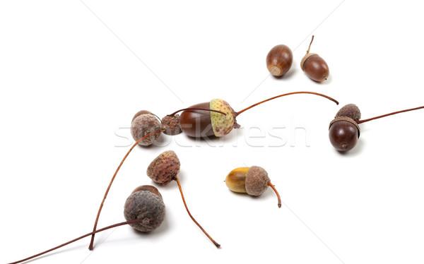 Zdjęcia stock: Jesienią · żywności · drewna · lasu · charakter · studio