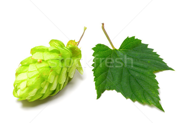 Blossoming hop and leaf on a white background Stock photo © BSANI