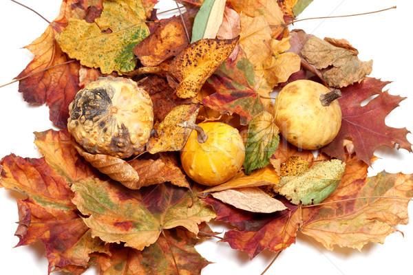 Three small decorative pumpkins on autumn leafs Stock photo © BSANI