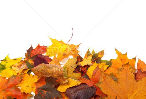 Autumn multicolor leafs Stock photo © BSANI