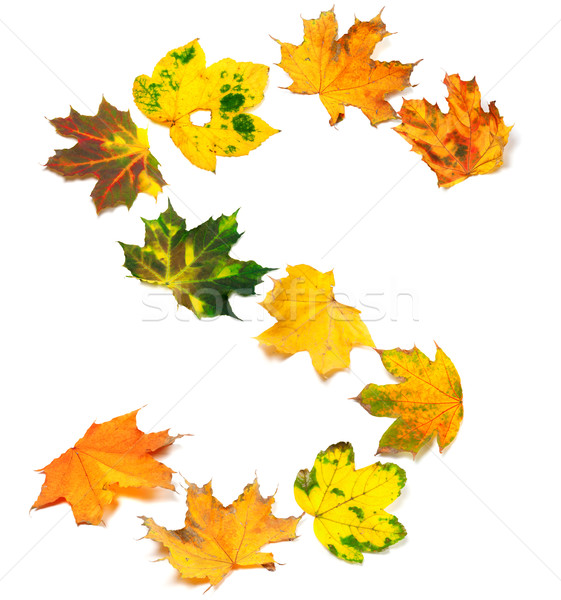 Letter S composed of autumn maple leafs Stock photo © BSANI