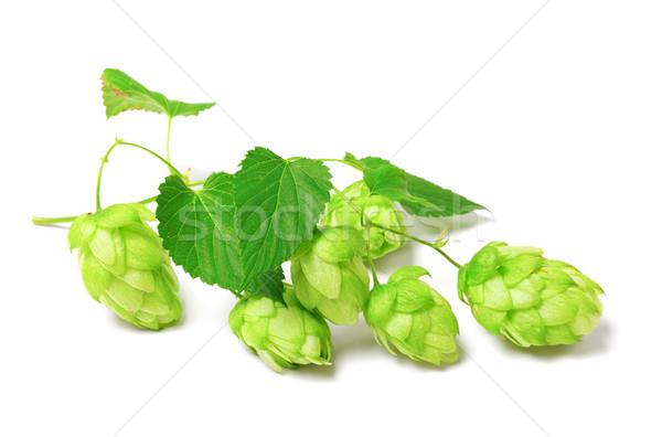 Fioritura hop bianco isolato birra natura Foto d'archivio © BSANI