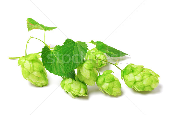 Florescimento salto branco isolado cerveja natureza Foto stock © BSANI