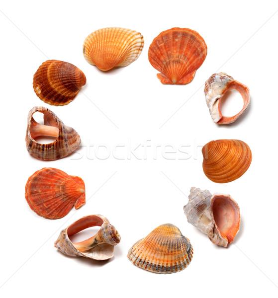 Letter O composed of seashells Stock photo © BSANI