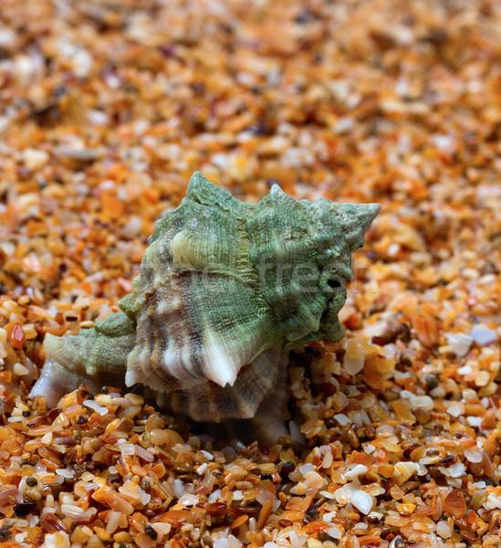 Molhado concha areia ver Foto stock © BSANI