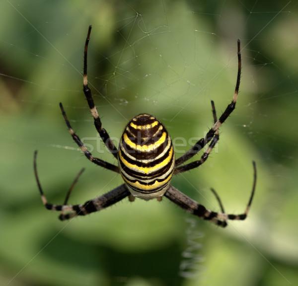 Spider on spiderweb Stock photo © BSANI