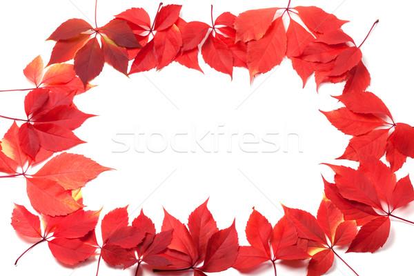 Autumn leaves frame isolated on white background Stock photo © BSANI