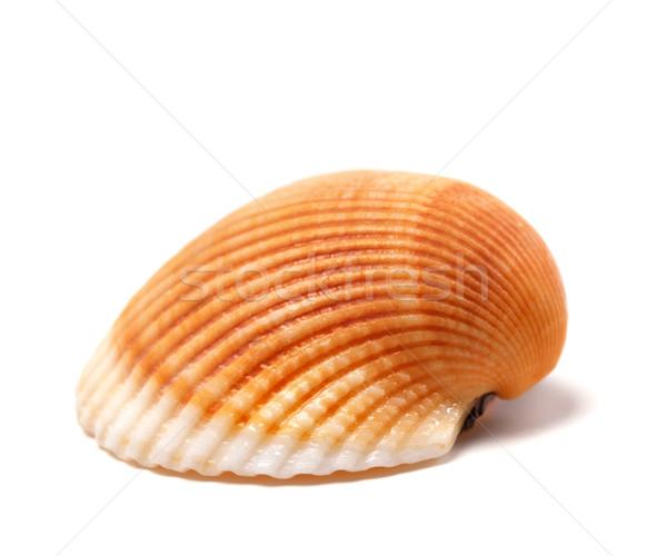 Seashell isolated on white Stock photo © BSANI