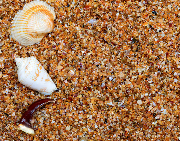 Seashells and claw from crab on sand Stock photo © BSANI