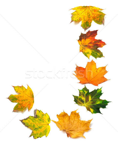 Letter J composed of autumn maple leafs Stock photo © BSANI