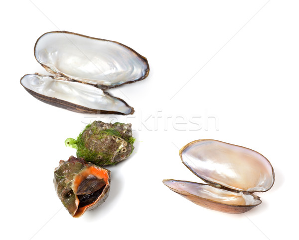Veined rapa whelk and shells of mussels Stock photo © BSANI