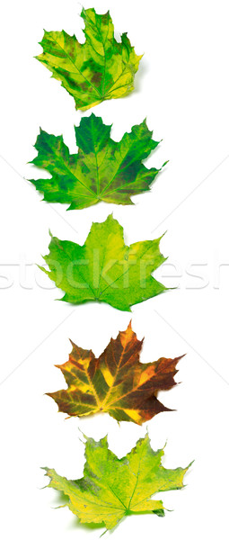Letter I composed of multicolor maple leafs Stock photo © BSANI