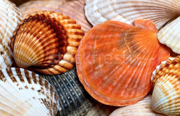 Background of seashells Stock photo © BSANI