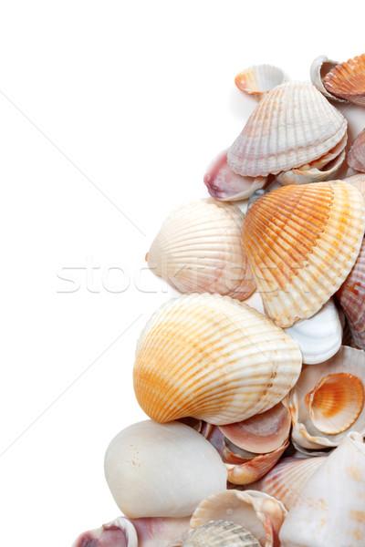Kagylók izolált fehér copy space tengerpart nyár Stock fotó © BSANI