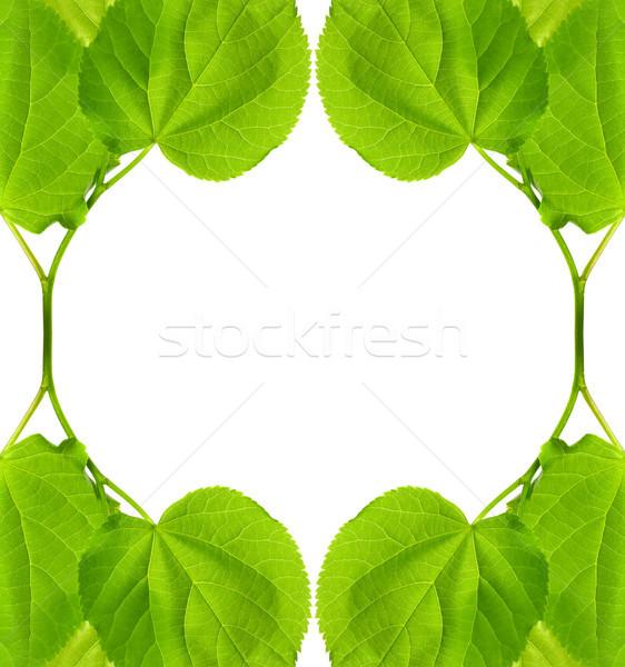 кадр молодые весны листьев изолированный белый Сток-фото © BSANI
