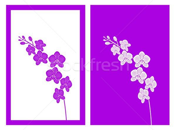 Orchidea vettore isolato design silhouette timbro Foto d'archivio © bspsupanut