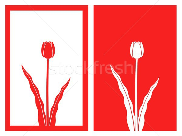 Stock photo: red tulip vector
