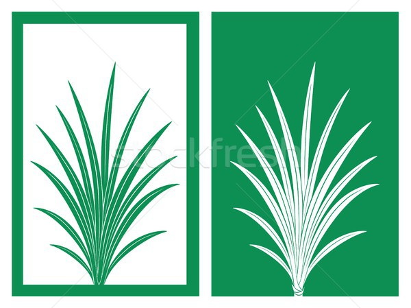 pandan vector Stock photo © bspsupanut