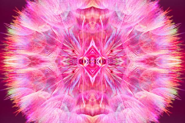 Stockfoto: Kleurrijk · roze · pastel · levendig · abstract · paardebloem