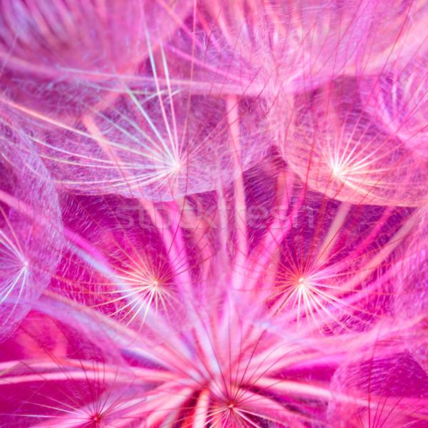 Colorful Pink Pastel Background - vivid abstract dandelion flowe Stock photo © bubutu