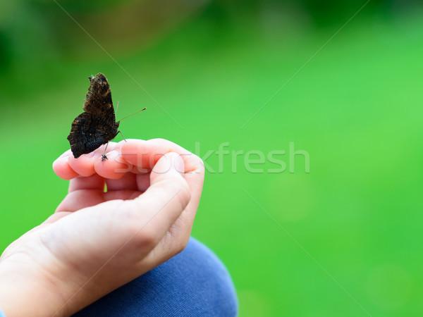 Mariposa sesión mano negro superficial fondo Foto stock © bubutu